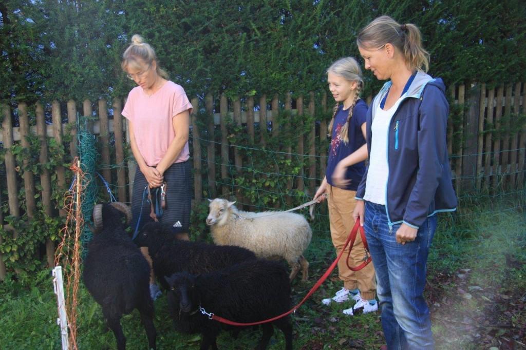 Die Hüterinnen der Schafe